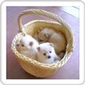 The Cute Puppies Slideshow! ブログパーツ